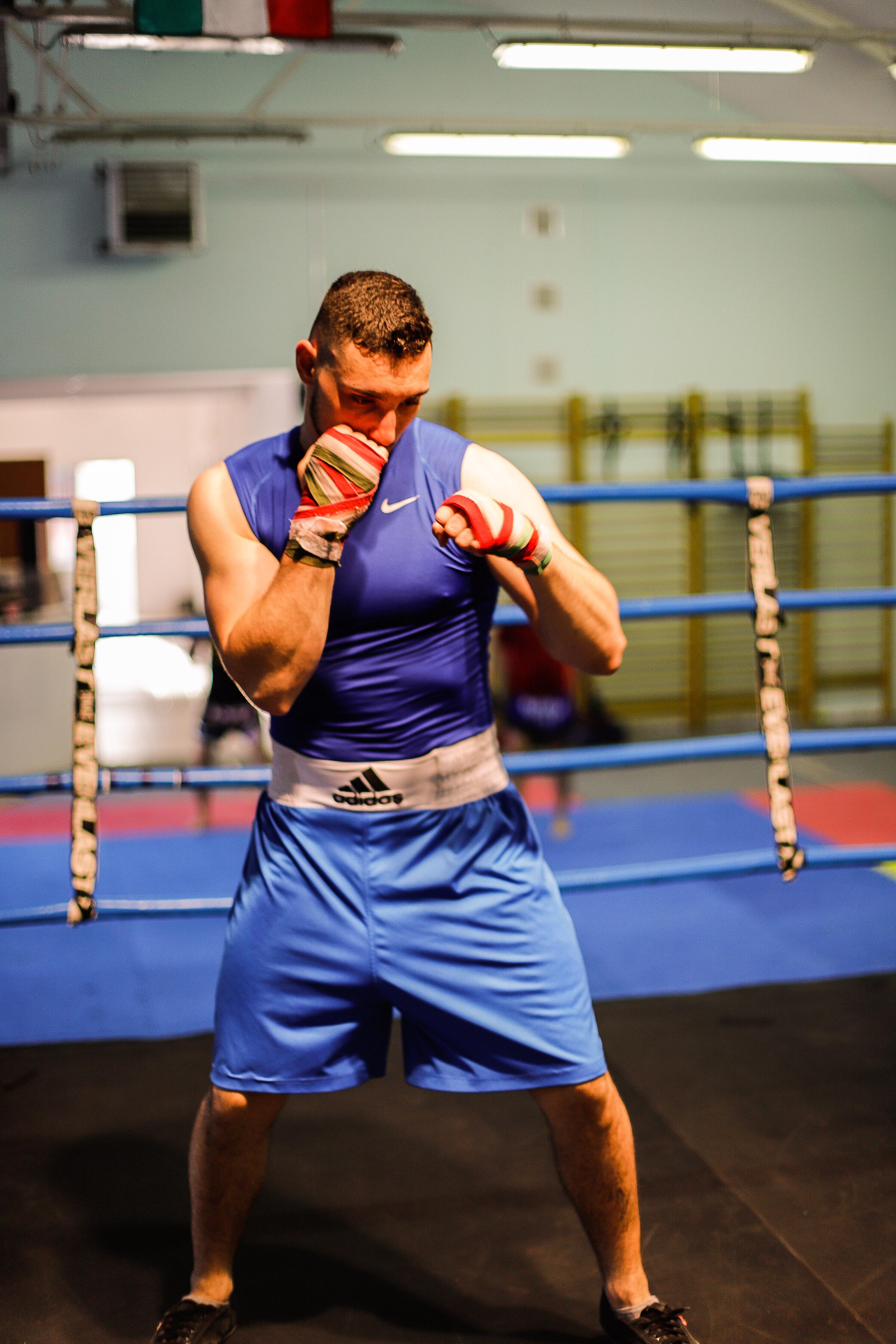 boxer portraits